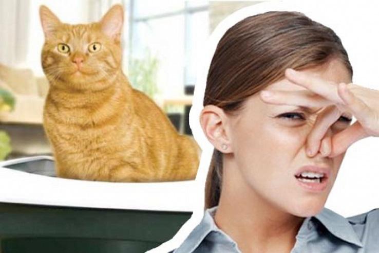 Запах мочи домашних животных в Туле