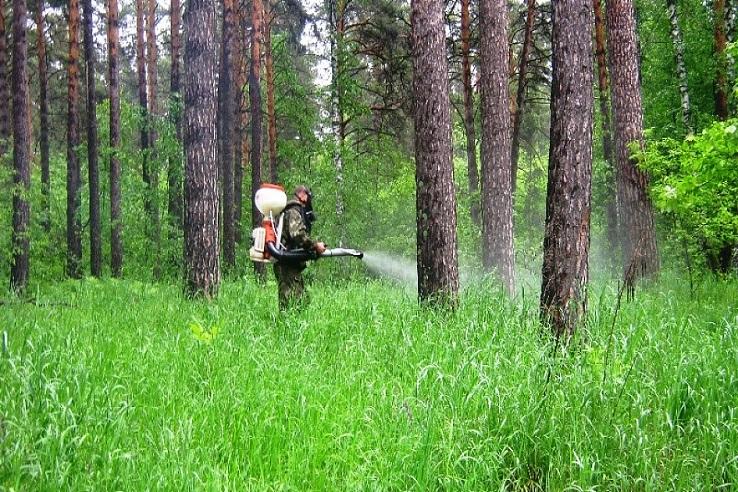 Обработка от клещей лесных массивов в Туле